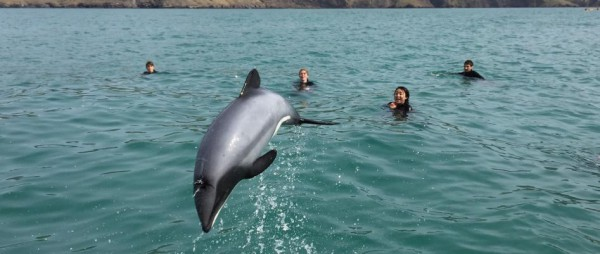ecoSEAker Swimming with Dolphins Akaroa